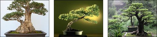 Bonsai Re-potting tips